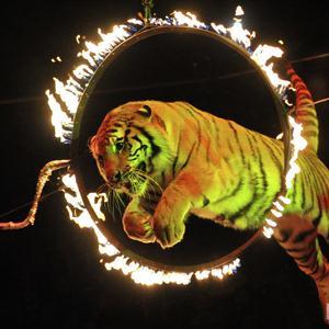 Цирки Знаменска