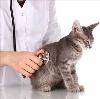 Ветеринарные клиники в Знаменске